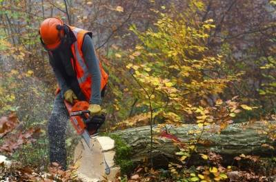 Man cutting wood with best chainsaw