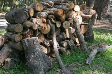 Electric chainsaw pile of firewood