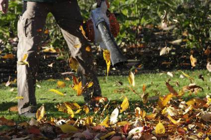 leaf blower reviews:  blowing leaves