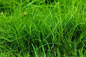 Best lawn mower for lush grass