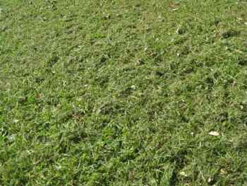 best lawn mowers: grass clippings discharged