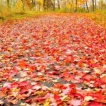 Clearing autumn leaves – tips, tricks and tools for the job